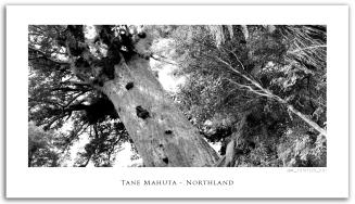 SITE_NZ_034