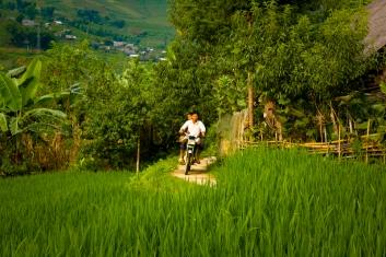 Terraced rice fields in Sa Pa, Vietnam