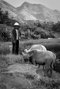 Sa Pa Farmer with buffalo