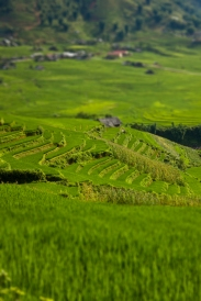 Terraced rice fields in Sa Pa